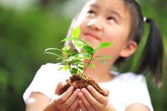 засадите детенышей Стоковые Изображения RF