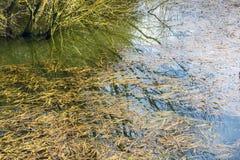Засадите ненужный плавать на поверхность реки в сельском районе в предыдущей весне Стоковые Изображения RF