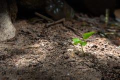 Засадите расти в почве и вырастите концепция стоковое изображение