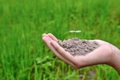 Засадите расти в почве на зеленой предпосылке природы стоковое изображение rf