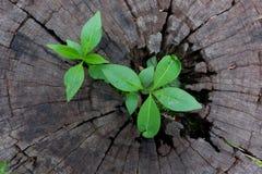 Засадите расти до конца хобота пня дерева Стоковые Фото