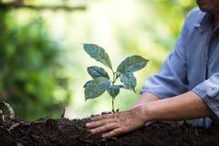 Засадите саженцы кофе завода естественной предпосылки дерева в зеленом цвете природы свежем Стоковое фото RF