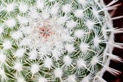 засадите succulent Стоковое Изображение