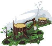засаженные пни saplings Стоковые Изображения