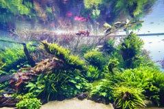 Засаженный аквариум Стоковое фото RF