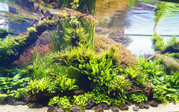Засаженный аквариум стоковое изображение rf
