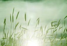 засаживает воду захода солнца Стоковое Изображение RF
