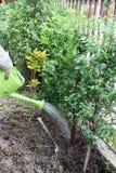 Засаживает дерево Стоковые Изображения RF
