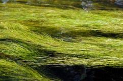 засаживает реку Стоковая Фотография