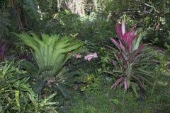 засаживает тропическое Стоковое Фото