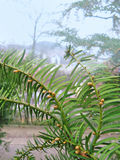 засаживает тропическое Стоковые Фото