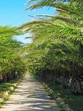 засаживает тропическое Стоковая Фотография