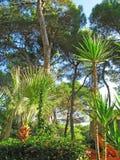 засаживает тропическое Стоковые Фотографии RF
