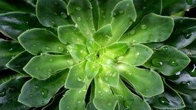 засаживает succulent стоковое изображение