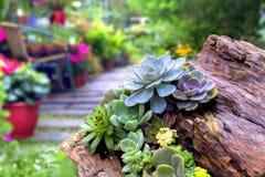 засаживает succulent Стоковая Фотография