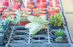 засаживает succulent Стоковое Изображение RF