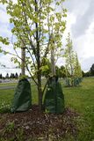 Засаживать деревья в городе стоковое фото