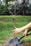 Засаживать деревья для того чтобы сохранить мир Стоковые Изображения