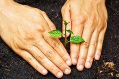 Засаживать дерево стоковое изображение