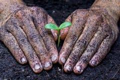 Засаживать дерево стоковое фото rf