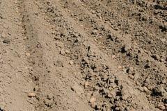 Засаживать картошки семени Стоковая Фотография RF
