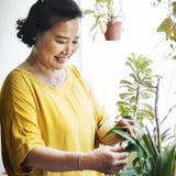 Засаживать концепцию деятельности при домохозяйки роста плантации Стоковые Фотографии RF