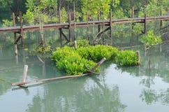 Засаживать мангровы Стоковые Фото