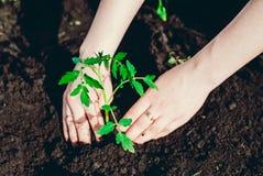 Засаживать саженцы в саде Стоковые Фотографии RF