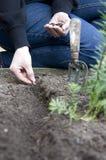 засаживать семя Стоковое Изображение RF