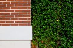 засаживать стены валов Стоковая Фотография
