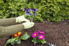 засаживать цветков Стоковое фото RF