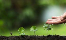 Засадите дерево, вырастите деревья кофе, свежесть, руки защищая деревья, мочить, растя, зеленый цвет, Стоковые Изображения