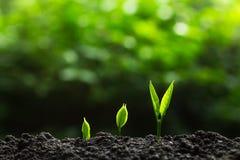 Засадите дерево в природе Стоковое Фото