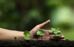 Засадите дерево, защитите дерево, помощь руки дерево, растущий шаг, моча дерево, дерево заботы, предпосылка природы стоковое фото rf