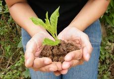Засадите дерево для того чтобы помочь миру Стоковая Фотография