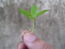 Засадите дерево Стоковые Изображения