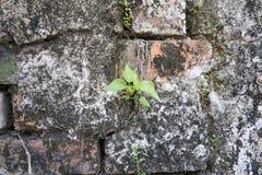 Засадите меньшее дерево на старых кирпичах и старой предпосылке бетонной стены Стоковая Фотография
