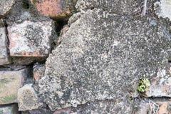 Засадите меньшее дерево на старых кирпичах и старой предпосылке бетонной стены Стоковое Изображение