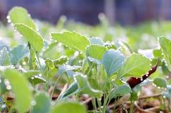 Засадите огород/овощ на почве/органическом пестициде для овощей стоковое изображение rf