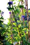 Засадите огород/овощ на почве/органическом пестициде для овощей стоковое фото rf