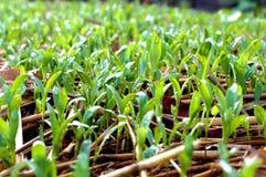 Засадите огород/овощ на почве/органическом пестициде для овощей стоковая фотография