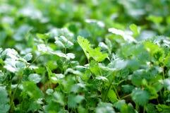 Засадите огород/овощ на почве/органическом пестициде для овощей стоковая фотография rf