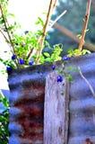Засадите огород/овощ на стене/стене цинка стоковые изображения rf