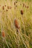 засевает болото травой Стоковое Изображение RF