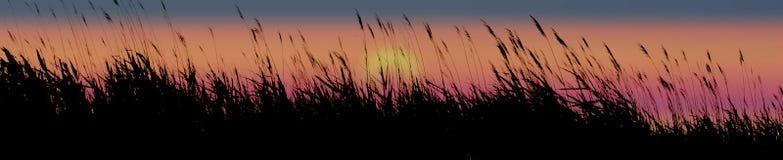 засевает заход солнца травой Стоковое Изображение