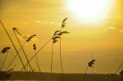 засевает заход солнца травой стоковая фотография