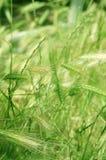 засевает лето травой стоковая фотография rf