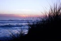 засевает море травой Стоковое Фото
