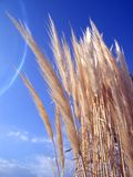 засевает одичалое травой Стоковая Фотография RF