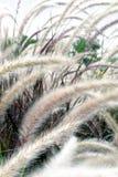 засевает одичалое травой Стоковая Фотография